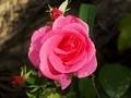 Vidéo - Les fleurs de mon jardin