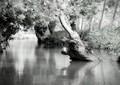 Monstre des marais